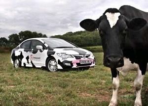 Allevamenti bovini e inquinamento